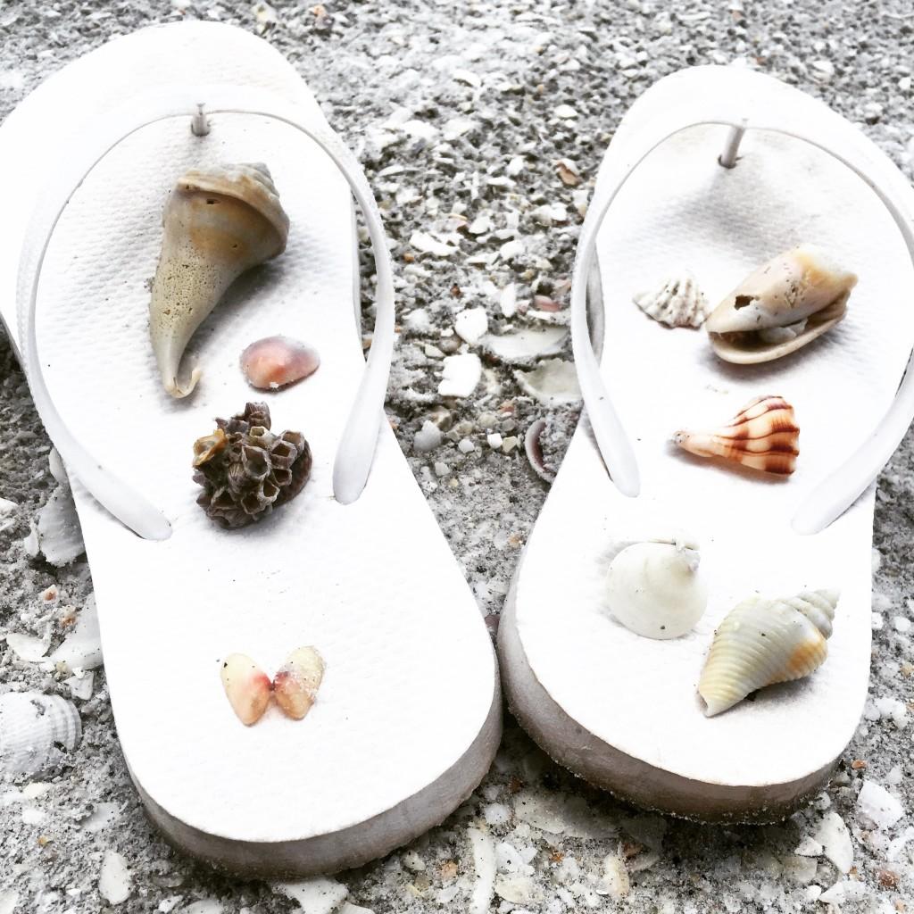 Shells that I found
